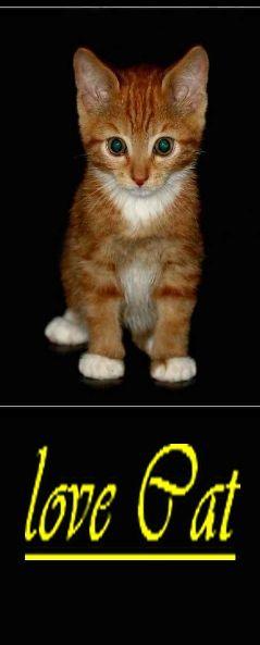 love_cats_.jpg